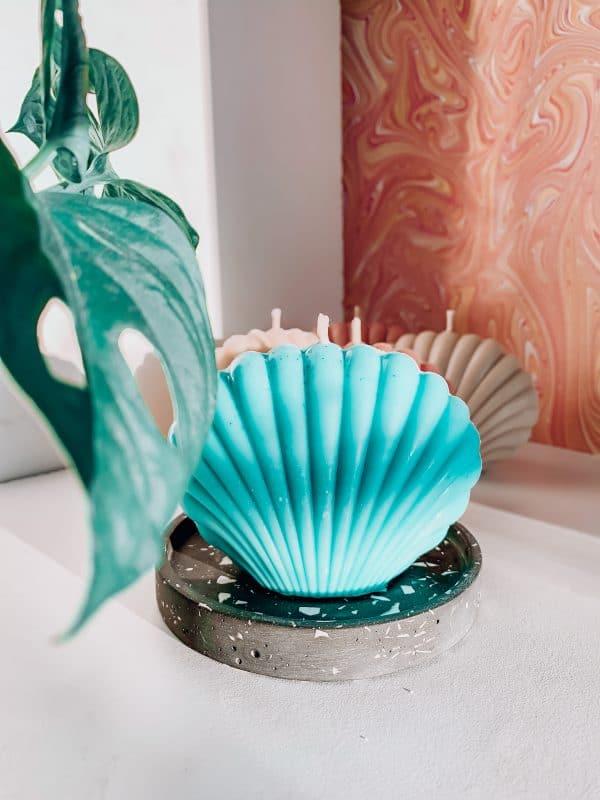 Bougie coquillage bleu pastel plante verte californien
