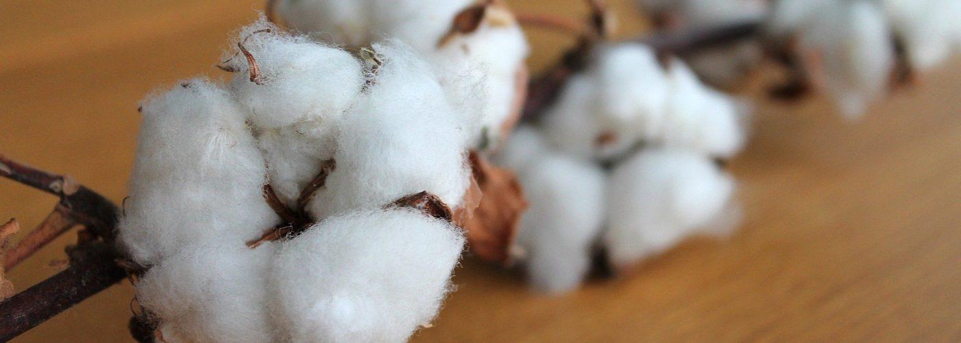 Avantage du coton bio vêtements surf